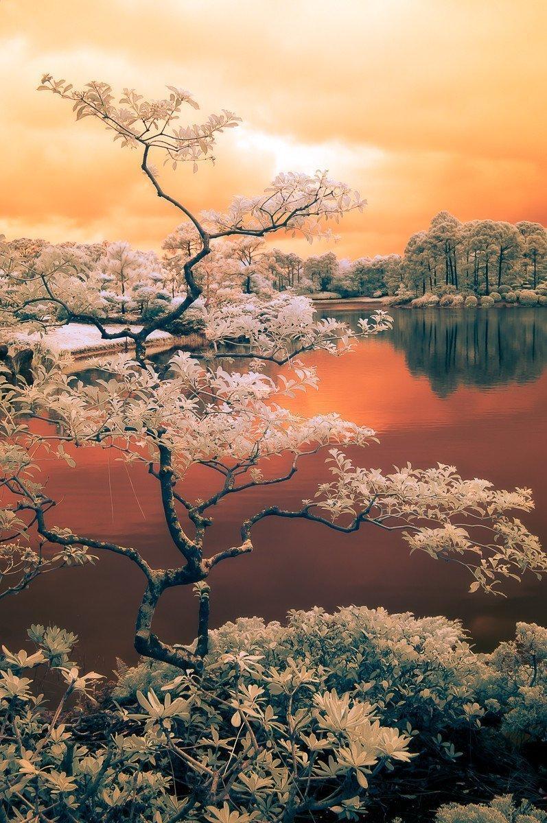 Siamese Dream I