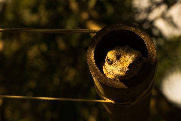 frog-photo-Little-Buddha